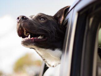 Pes byl pochopitelně v autě první. Jak už tak naši miláčkové jasně rozumějí našemu počínání, to odpoledne vyhodnotil, že dnes se budou konat dvě jeho oblíbené kratochvíle.