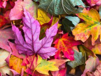 podzimní barevné listí