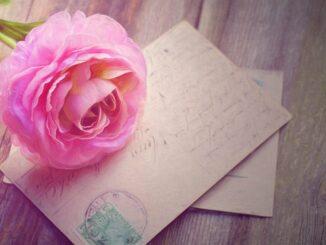 Pohlednice přes kterou je růže