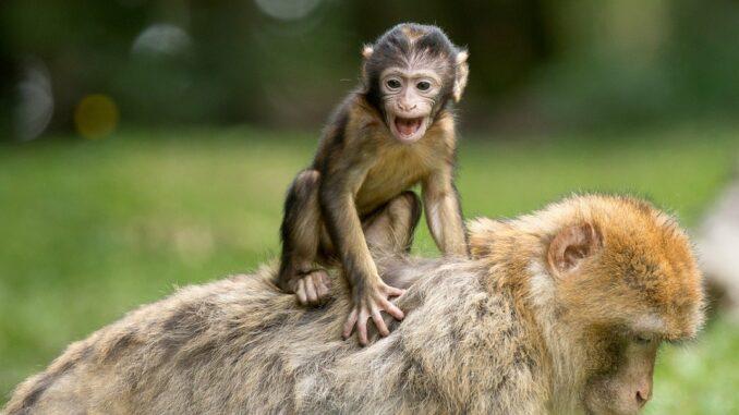 Vysílání živě, online přenosy ze zoo.