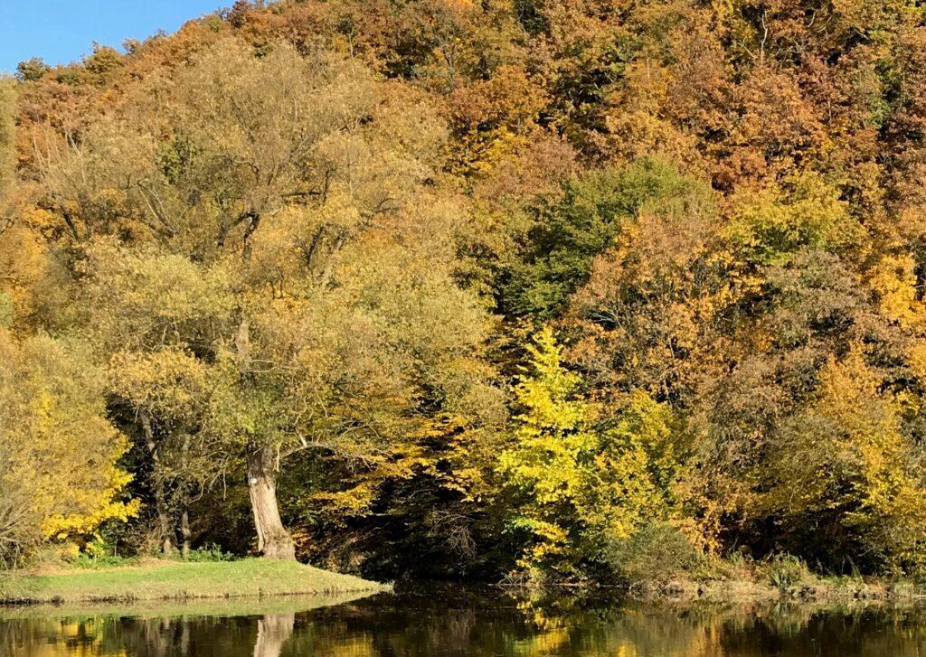 Podzimní stromy u vodní plochy.