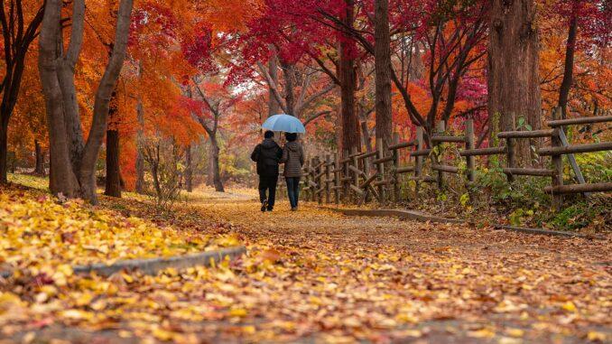 Dvojice pod modrým deštníkem se prochází podzimním parkem