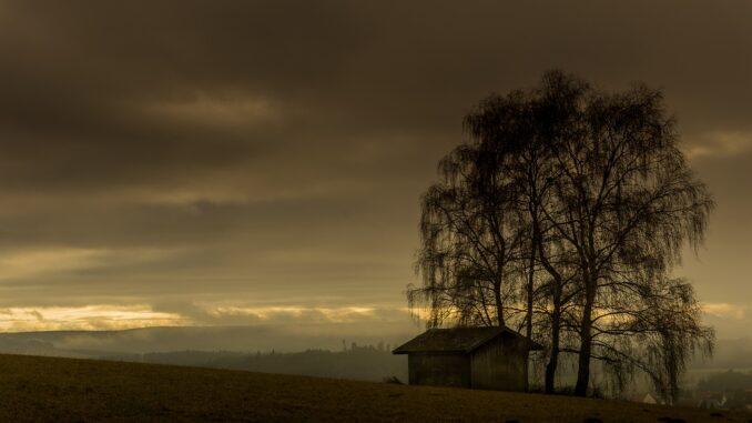 Podvečer, osamělá chata, strom se svěšenými větvemi.