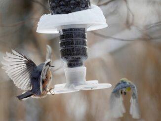 Pták přilétá ke krmítku.