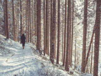 Zasněžená cesta lesem