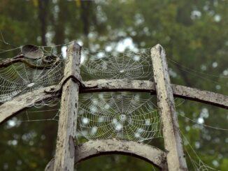 Pavučina na staré kovové bráně.