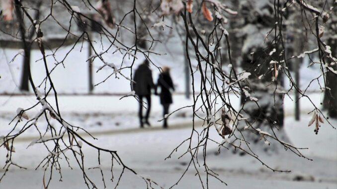 Pár jde spolu zasněženým lesem