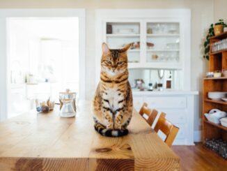 Kočka sedí na kuchyňském stole.