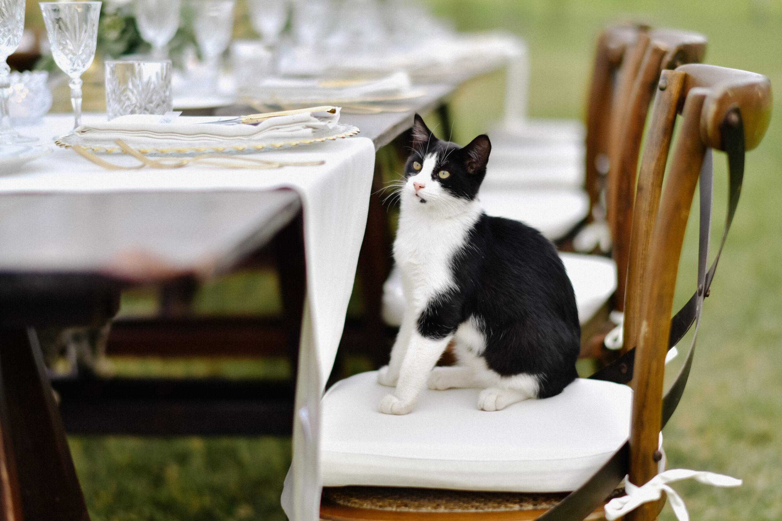 Kočka sedí na židli u stolu.