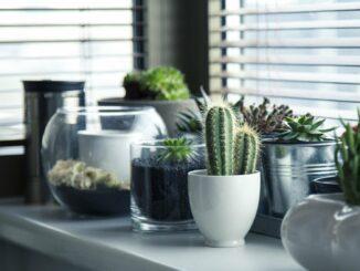 Kaktusy na parapetu.