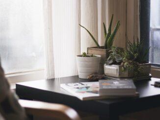 Kaktusy na pracovním stole.