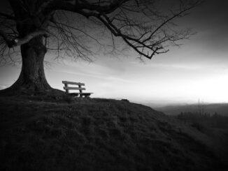 Samota - lavecka pod stromem v seru po zapadu slunce.