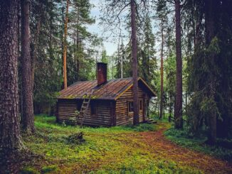 Chata v lese.
