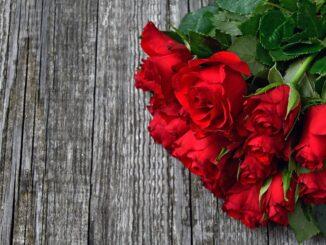 Kytice rudých růží.