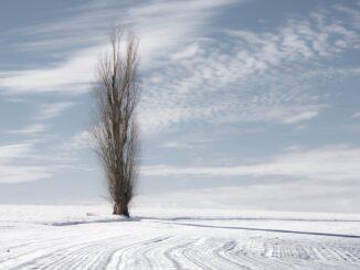 Osamělý strom.
