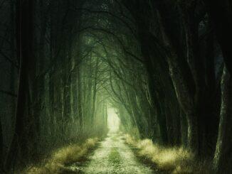Lesní cesta temným lesem