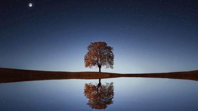 strom zrcadlící se v hladině jezera
