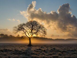 Osamělý strom v zimní krajině