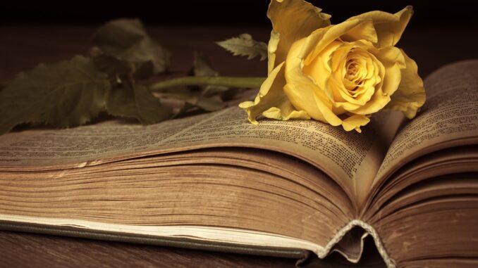 žlutá růže na otevřené staré pohádkové knížce.