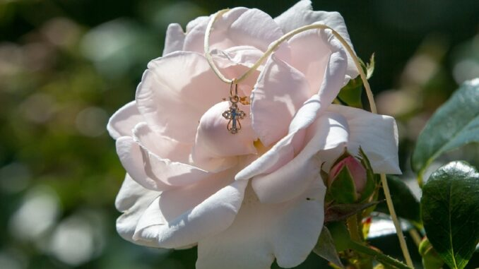 Růžová růže a přes ni křížek.