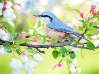 Pták na rozkvetlé větvi.