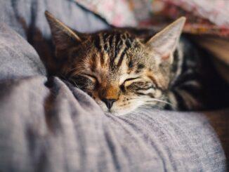 Spící kočka.