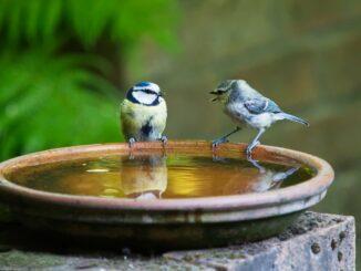 Dva ptáci sedí na pítku.
