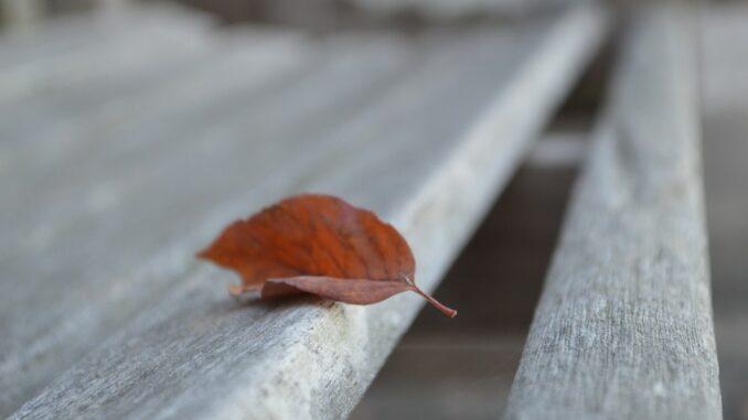 Podzimní list na opuštěné laviččce