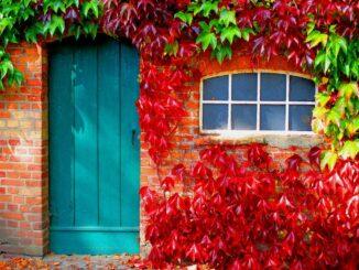 Dveře a okno ve zdi obrostlé červeným listím.