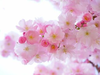Rozkvetlé květy na stromě.