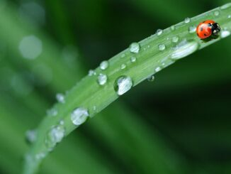 kapky deště na listě.