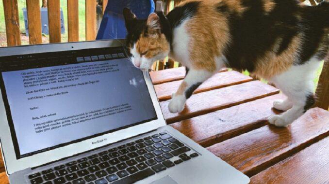 Kočka se otírá o monitor notebooku.