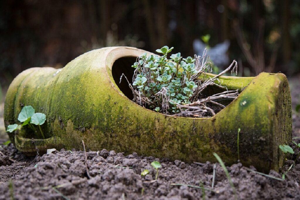 Rostlina v květináči.